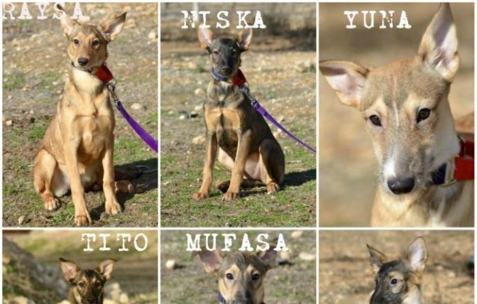 LA CAUSA DEL MES DE FEBRERO:  Ciudad Animal Refugio Animales Abandonados
